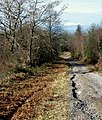 Forest Track - geograph.org.uk - 1159194.jpg