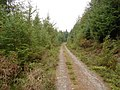 Forest Track - geograph.org.uk - 251094.jpg