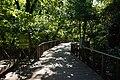 Fort Worth Botanic Garden October 2019 09 (Texas Native Forest Boardwalk).jpg