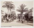 Fotografi av Hyères, Boulevard des Palmiers - Hallwylska museet - 103116.tif