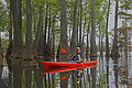 Franny kayaking in the tupelo gums.jpg