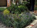 Front garden August 2009 - Flickr - peganum (1).jpg
