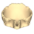 Frontal bone close-up inferior3.png