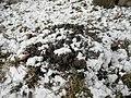 Frost heaving.jpg