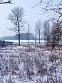 Frozen Landscape (8385935657).jpg