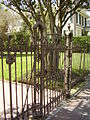 Garden District Iron Gate 2.jpg