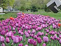 Garden of the Provinces and Territories - Tulip Festival - 3.jpg