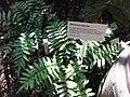 Gardenology.org-IMG 0822 rbgs10dec.jpg