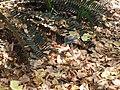 Gardenology.org-IMG 4171 hunt0904.jpg