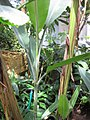 Gardenology.org-IMG 7550 qsbg11mar.jpg