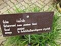 Gardenology.org-IMG 7615 qsbg11mar.jpg