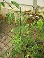Gardenology.org-IMG 7695 qsbg11mar.jpg
