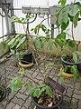 Gardenology.org-IMG 7803 qsbg11mar.jpg
