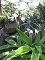 Gardenology.org-IMG 9673 rbgm10dec.jpg