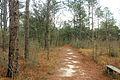 Gfp-georgia-reed-bingham-state-park-nature-trail.jpg