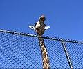 Giraffe head - Flickr - 416style.jpg