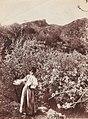 Gloeden, Wilhelm von (1856-1931) - n. 2635 recto - Bambina e mandorli in fiore - Millea bros auctions.jpg