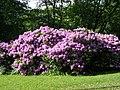 Goteborg rododendron.jpg