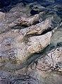 Gotland - KMB - 16001000530409.jpg