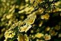 Gradina Botanica (8736844514).jpg