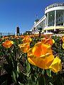 Grand Hotel Tulips.JPG