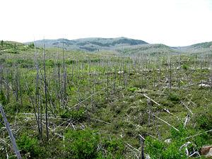 Réserve écologique Thomas-Fortin – Wikipedia