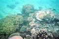 Great Barrier Reef (3611006685).jpg