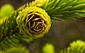 Green Cone (3677670153).jpg