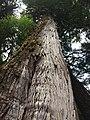 Gwaii Haanas National Park (27455567652).jpg