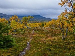Höst i Vålådalens naturreservat.jpg