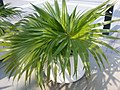 HK Central Edinburgh Place planter Oct-2012.jpg