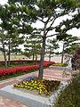 Hampyeong butterfly festival 042.JPG
