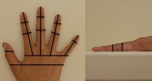 Hand geometry - Image: Hand Geometry and Measurements