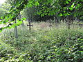 Harju-Madise vana kalmistu, 2.JPG
