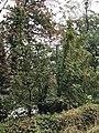 Haut escalier des 100 marches, cimetière du mont-Valérien, Suresnes 3.jpg