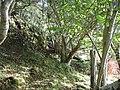 Hazel woods, Camastianavaig. - geograph.org.uk - 68926.jpg