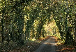Heading for Humbly Grove - geograph.org.uk - 616855.jpg