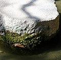 Heian Shrine (5767173598).jpg