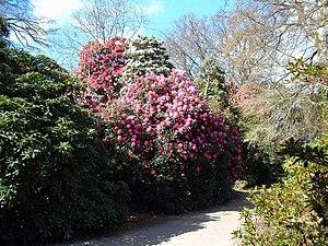 English: Heligan Gardens Sunny Spells
