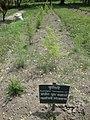 Herbs - panoramio.jpg