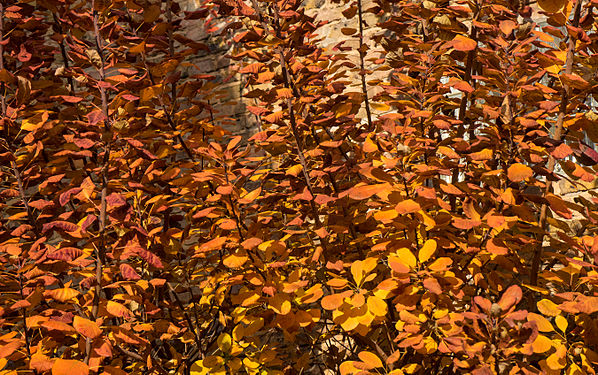 Herbst141120-003.jpg