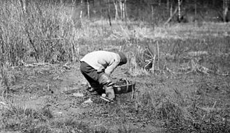 Chinese Canadians - A Chinese man picking watercress in Toronto's High Park, 1920