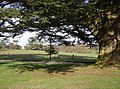 Highclere Park - geograph.org.uk - 360279.jpg
