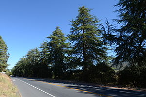 California State Route 152 - Image: Highway 152 Tree Row