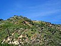 Hiking Towsley Canyon (2323865183).jpg