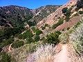 Hiking Towsley Canyon Loop (5894588431).jpg