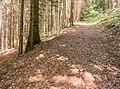 Hiking path in Morzine (3).jpg
