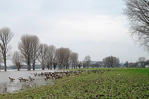 """Poll, Cologne - High water on the """"Poller Wiesen"""", which are a popular location for outdoor festivals"""