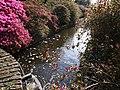 Holandia Keukenhof - panoramio (3).jpg