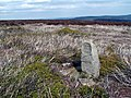Holling Dale WM Boundary Stone - geograph.org.uk - 414631.jpg